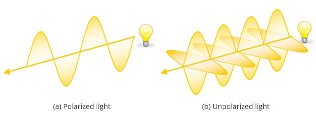 polarized light essay